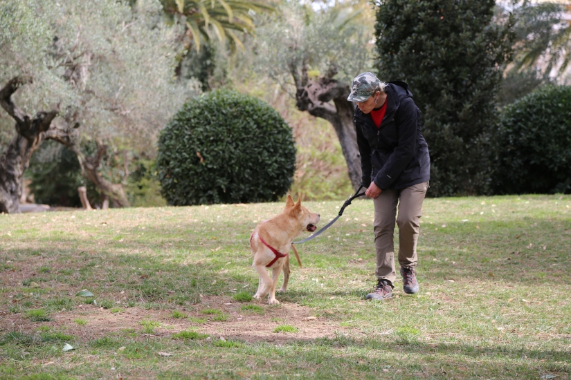 perro aprendiendo a andar
