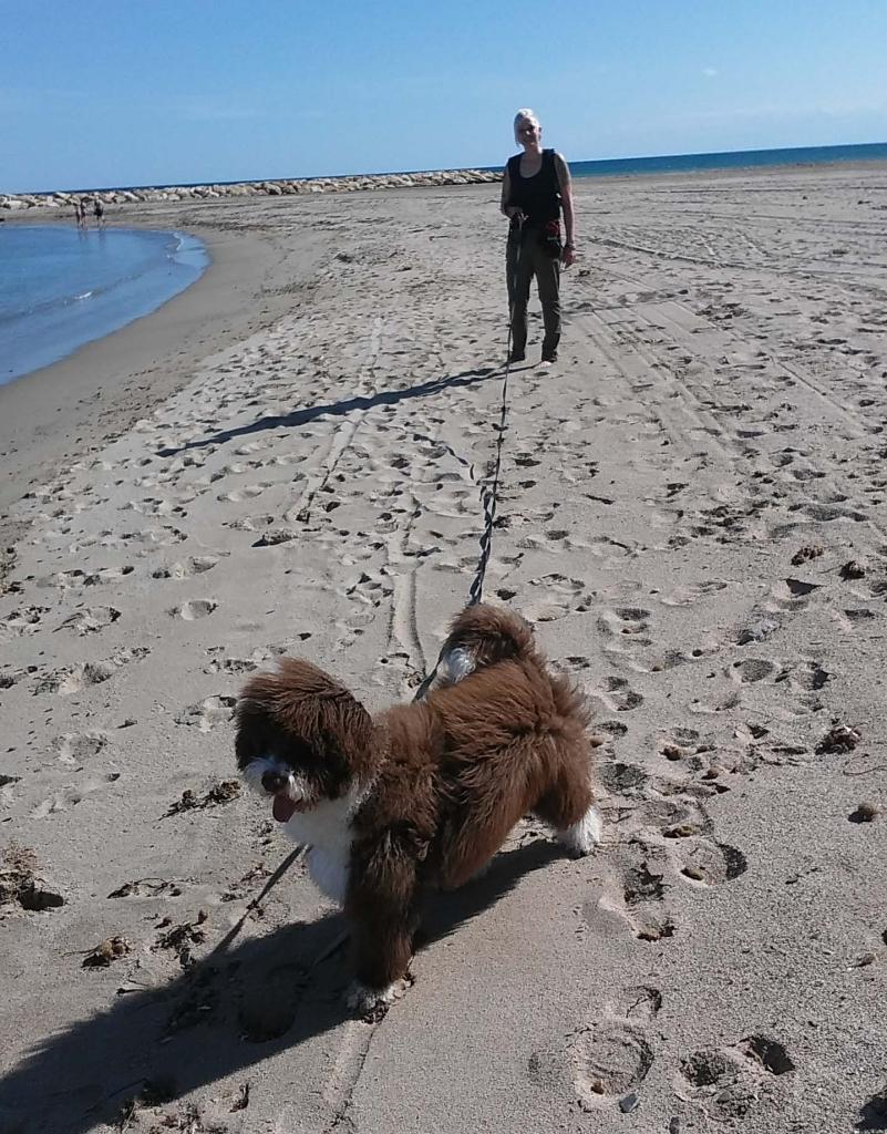 Perro de agua. Paseo personalizado con correa larga