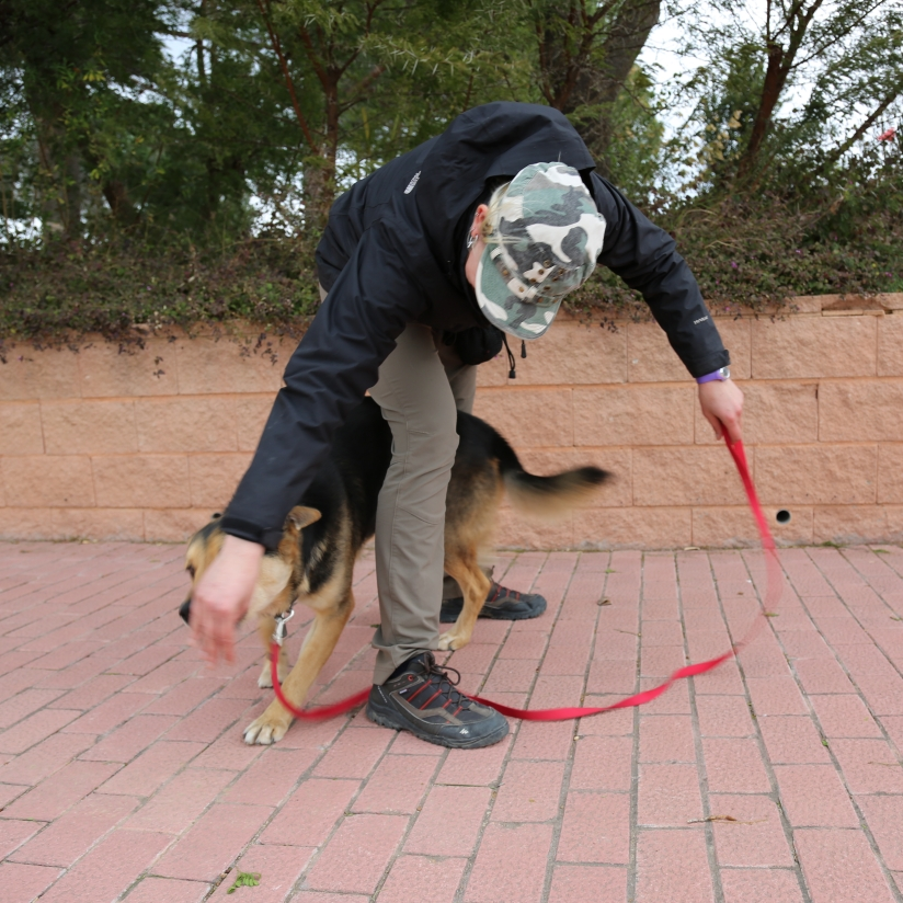 habilidades caninas
