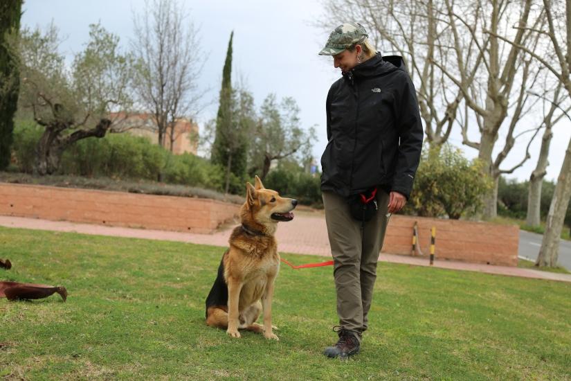 entrenamiento canino en positivo